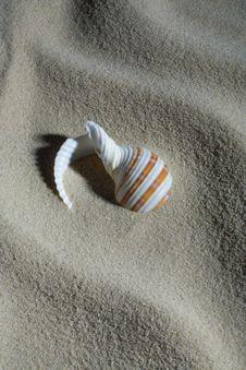 Free Cockleshell And Sand Stock Image - 15919581