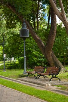 Two Bench Under Tree Royalty Free Stock Image
