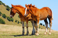 Free Beautiful Red Horses Taken In Italian Mountains Royalty Free Stock Photography - 15923707