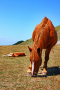 Free Beautiful Red Horses Taken In Italian Mountains Royalty Free Stock Photography - 15924367