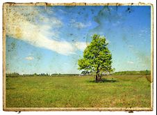 Free Green Oak Royalty Free Stock Photography - 15920337