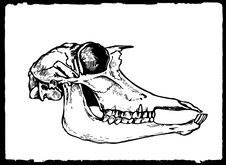 Free Drawing Skull Stock Image - 15920351
