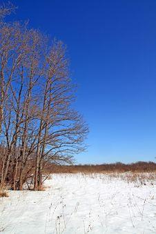 Free Oak On Winter Field Stock Image - 15920481