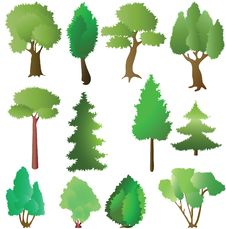 Free Deciduous And Coniferous Trees In The Summer Royalty Free Stock Images - 15920539