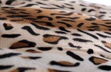 Free Leopard Skin Stock Photos - 15921183