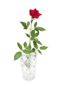 Free Red Rose Stock Photos - 15921233