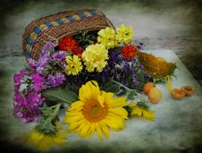 Basket With Flowers Stock Image