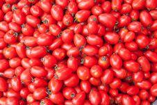 Free Tomato Royalty Free Stock Photography - 15922647