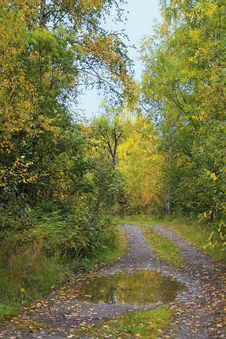 Free Autumn Forest Landscape Royalty Free Stock Photography - 15922987