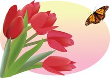 Free Bouquet Of Red Tulips Stock Photo - 15923820