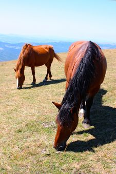 Free Beautiful Red Horses Taken In Italian Mountains Royalty Free Stock Photos - 15924348