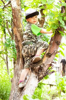 Little Boy Climbed A Tree Royalty Free Stock Photos