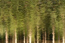 Free Green Reflection Royalty Free Stock Photos - 15925638