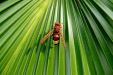 Free Bee On A Converging Leaf Stock Photos - 15925913