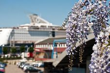 Free Flowering Plant In The Background Of A Cruise Ship Royalty Free Stock Photo - 15926415