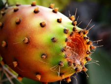 Free Cactus Fruit Ripe Stock Photo - 15927270