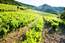 Vineyards In Provence Stock Photography