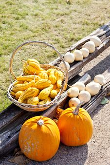 Free Pumpkins Stock Photos - 15927943