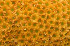Free Flowers Pattern Stock Photo - 15929970