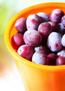 Free Ripe Plums Stock Images - 15930884