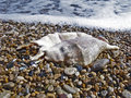 Free Sea Cockleshell Royalty Free Stock Images - 15933859
