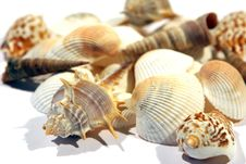 Free Sea Shells On White Stock Photo - 15930000