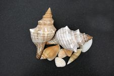 Free Shells On Black Sand Royalty Free Stock Image - 15930006