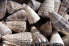 Free Triangular Sea Shells Stock Photography - 15930012