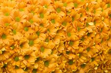 Free Flowers Pattern Stock Images - 15930014