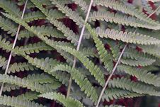 Free Fern Stock Photos - 15930033