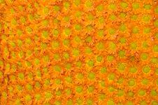 Free Flowers Pattern Royalty Free Stock Photo - 15930035