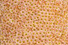 Free Flowers Pattern Royalty Free Stock Photo - 15930185