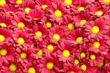 Free Flowers Pattern Stock Photos - 15930253