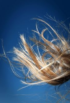 Free Abstract Hair View Royalty Free Stock Photos - 15930618