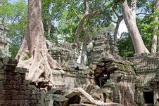 Free Ta Prohm In Angkor Royalty Free Stock Photos - 15930698
