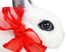 Free Rabbit With  Red Ribbon Royalty Free Stock Photo - 15931695