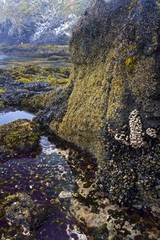 Free Tide Pool Stock Photography - 15932152