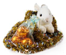 Free Rabbit Is Animal 2011 Royalty Free Stock Images - 15932839