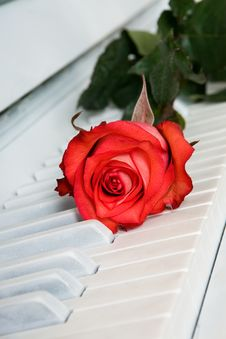 Free Red Rose On The White Piano Stock Images - 15933044