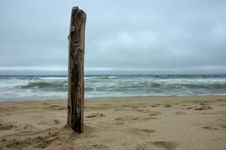 Free Beach Driftwood Stock Images - 15933814
