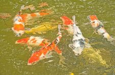 Free Gold Fish Pond: Abstract Background. Royalty Free Stock Image - 15934266