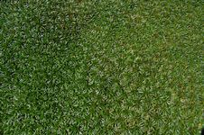 Free Grass As Background Royalty Free Stock Image - 15934276
