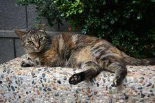 Free A Sleepy Cat Lies On The Stone Royalty Free Stock Photo - 15935815