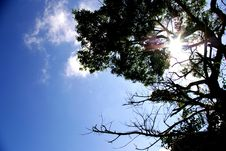 Free Blue Sky With Sunlight Royalty Free Stock Photos - 15935838