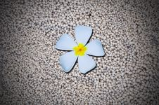 Free Temple Flower On White Sand Background Stock Image - 15935961