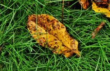 Free Fall Leaves Stock Photography - 15937322