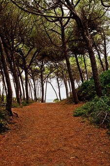 Free Forest Path Royalty Free Stock Images - 15937719