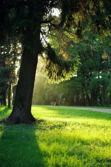 Free Tree In Evening Sunlight Royalty Free Stock Photo - 15939135