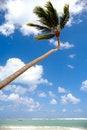 Free Exotic Beach Stock Photos - 15943413
