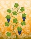 Free Vine Royalty Free Stock Photo - 15944205